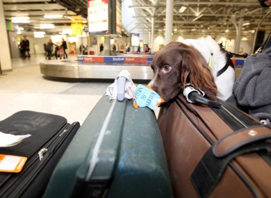 A sniffer dog searches for drugs in baggage (File photo)