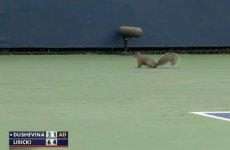WATCH: Confused squirrel interrupts US Open tennis match
