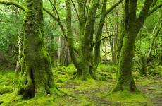 Forestry Inventory finds 10.5% of Ireland's total land area is forest