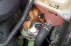 This tiny dog survived a 12 mile drive inside a car engine