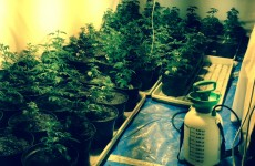 "Gardaí seize €300k worth of cannabis in raid on ""sophisticated grow house"""