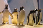 A wedding could be on the cards for Ireland's first gay penguins